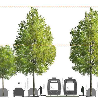 arbres-tramway-actu